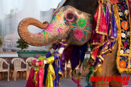 в Индию на Новый Год